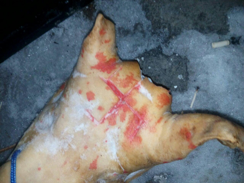 Swastika scratched into a pig's head