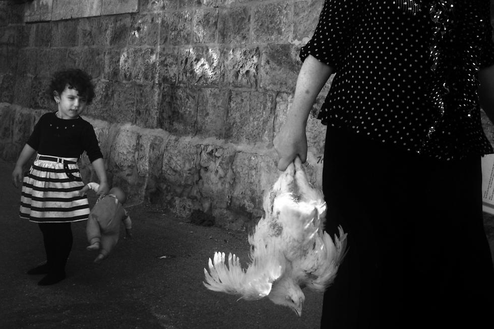 מבט מסוקרן אל התרנגולת, כפרות (צילום: אילן בן יהודה) (צילום: אילן בן יהודה)