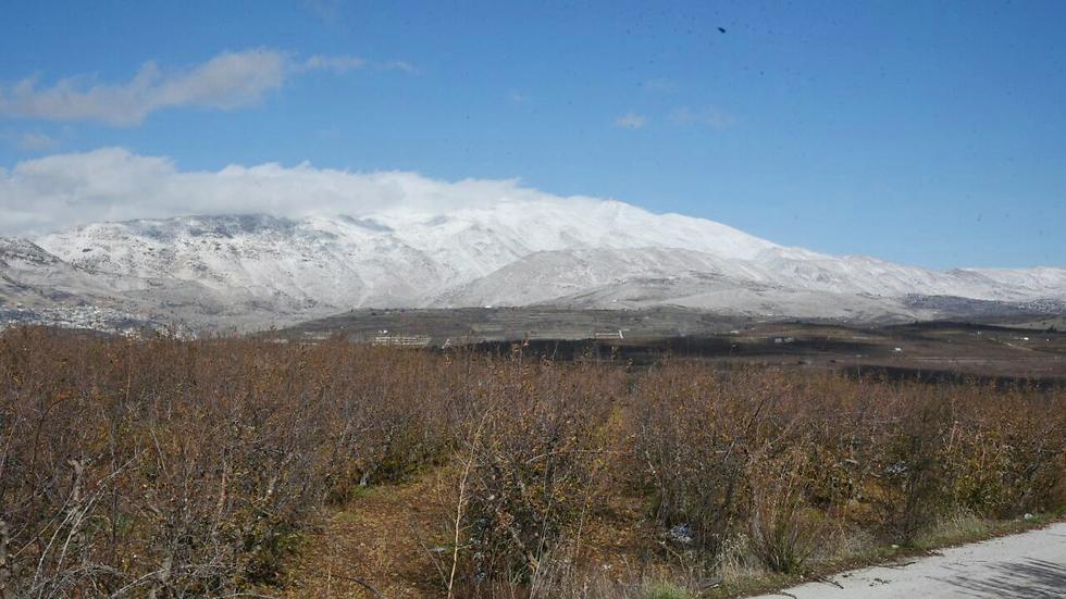 צפון רמת הגולן (צילום: אביהו שפירא) (צילום: אביהו שפירא)