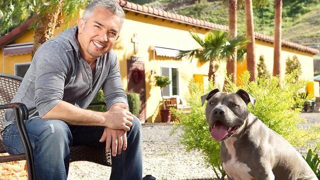 """סיזר מילאן. מחנך את הכלבים ואת הבעלים (צילום: יח""""צ)"""