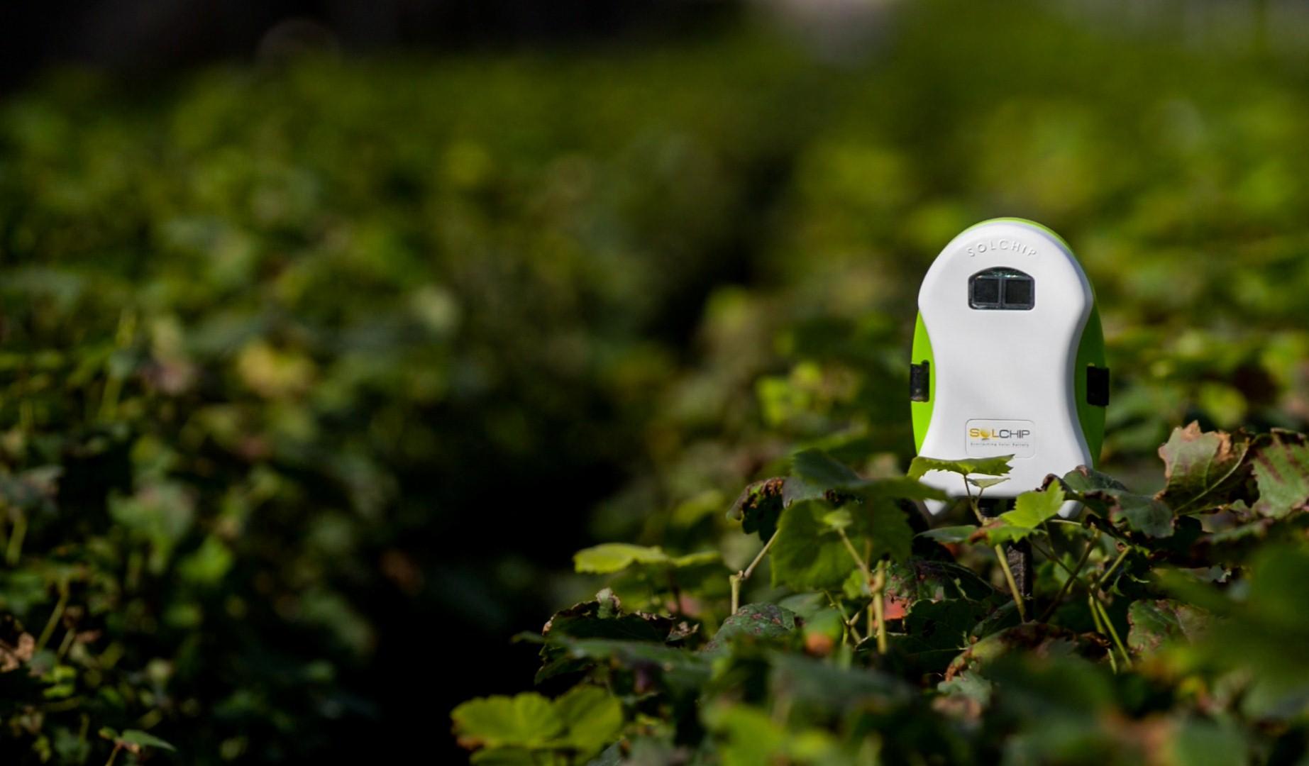 השבב הסולארי מותקן בשדה (צילום: לואיז גרין) (צילום: לואיז גרין)