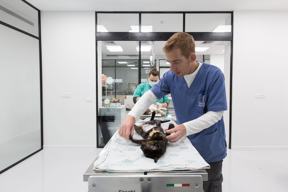 ד''ר ערן גרין, מנהל המרפאה. כדי לשמור על היגיינה מרבית ולהימנע ככל האפשר מזיהום, פתחי הניקוז הרצפתיים הם נפרדים לכל חדר (ד''ר גרין רק מצולם כאן עם החיה, ואינו מטפל בה) (צילום: דור נבו)