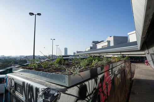 גינה קהילתית בתחנה המרכזית החדשה בתל אביב. פרויקט של קולקטיב אניה (צילום: טל ניסים)