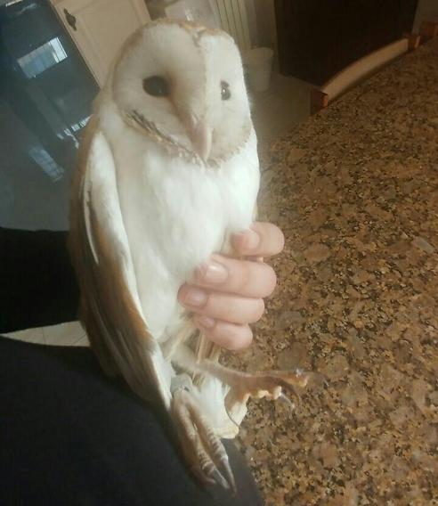 The owl in the physician's home (photo: Acpd)