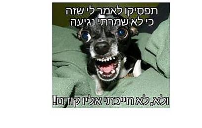 (אלעד אריה קורן)