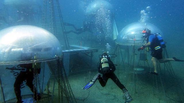 הצוללנים מטפחים את הירקות ואוספים את היבול (צילום: באדיבות Nemo's Garden) (צילום: באדיבות Nemo's Garden)