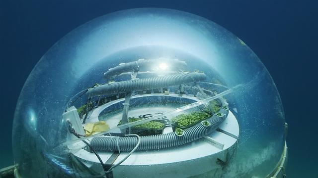 כיפה ביוספרית מלאה באוויר (צילום: באדיבות Nemo's Garden) (צילום: באדיבות Nemo's Garden)