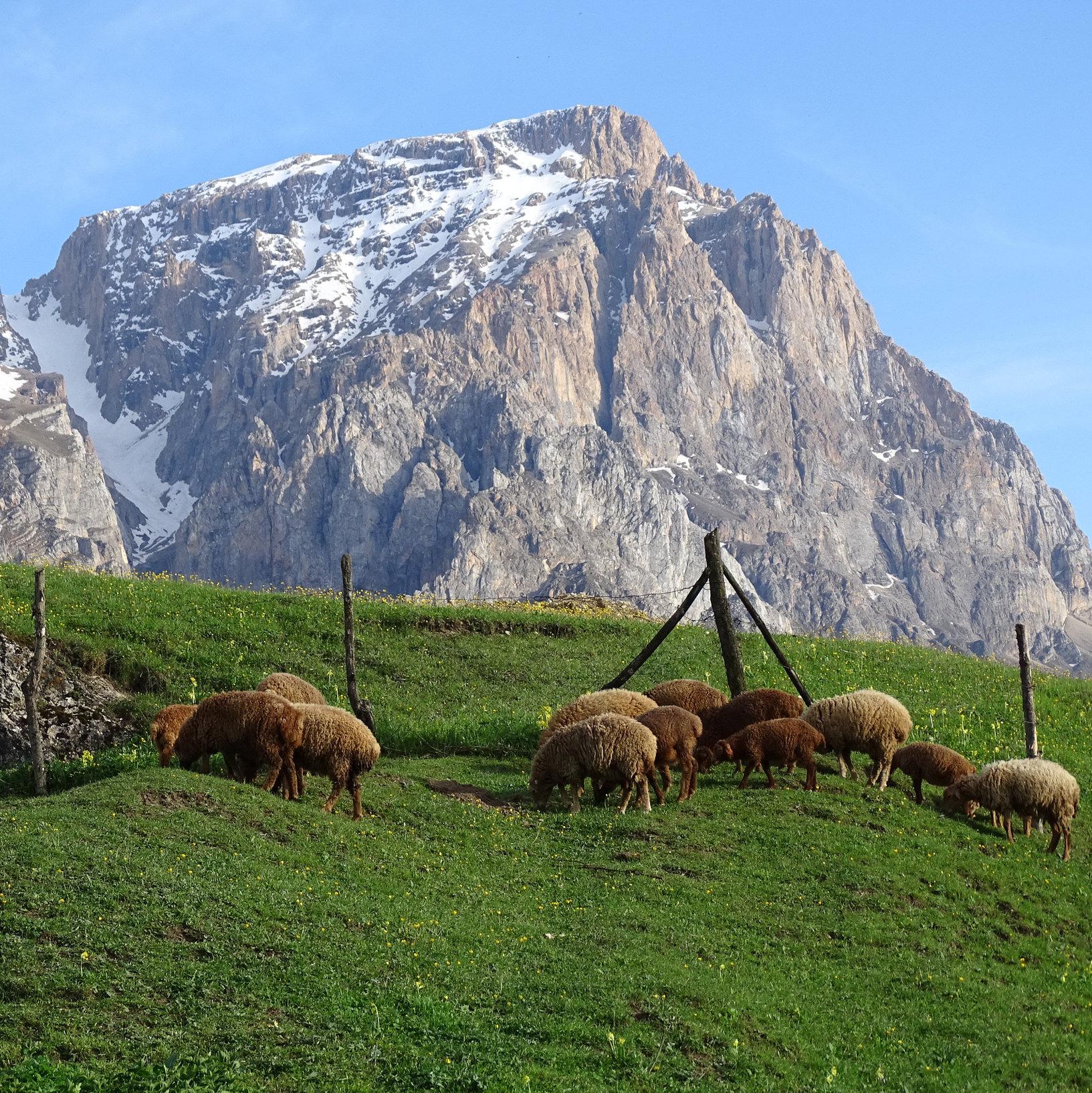הרי הקווקז באזרבייג'ן | צילום: פליקר