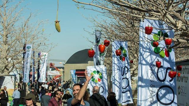תערוכת החקלאות בערבה (צילום: אדוארד קפרוב)