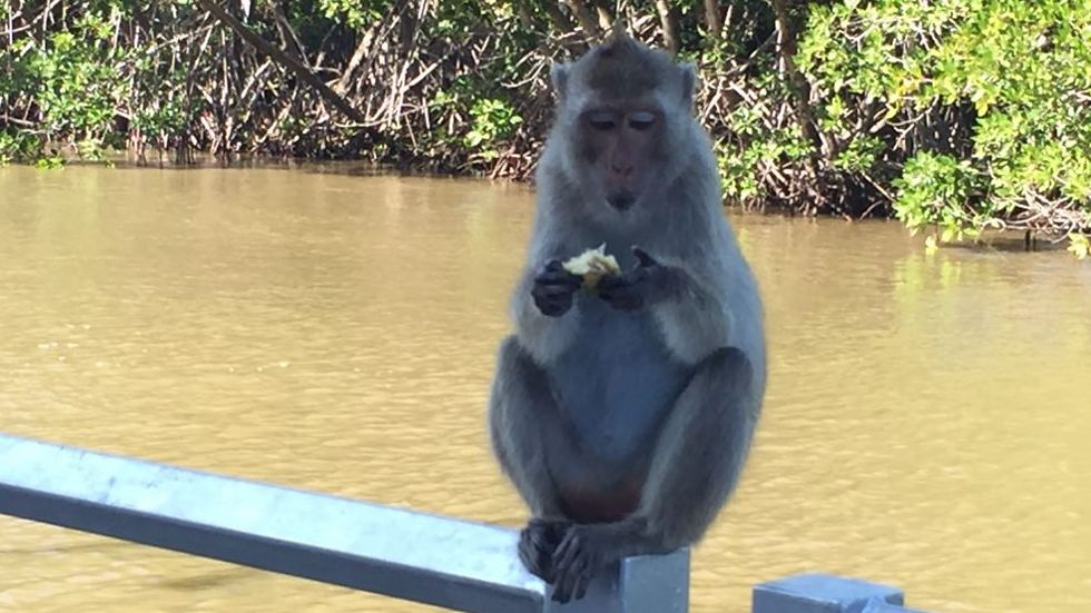 The only pickpockets in the area are the monkeys, who are not above rummaging through your bag for food (Photo: Gaby Zohar)