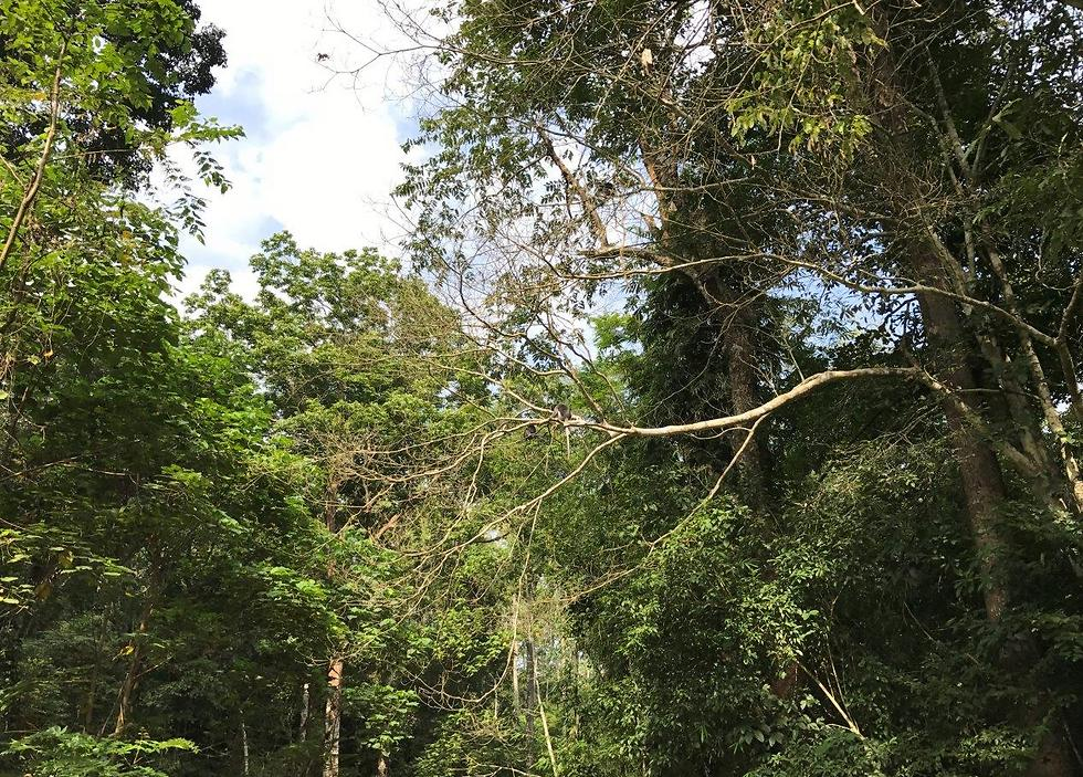 Can you spot the monkeys in the trees? (Photo: Yaara Shalom)