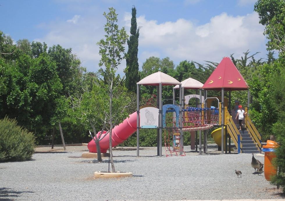 מעבר לחיות, תמצאו כאן גם פארק שעשועים, מסעדה ובית קפה (צילום: דקלה סמית')