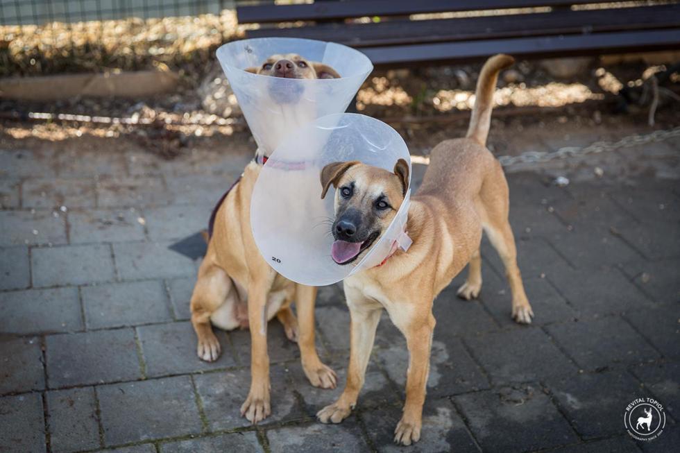 """(צילום: רויטל טופיול, כלבייה עירונית ת""""א)"""