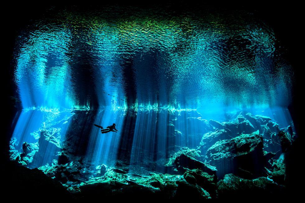 צלם תת-ימי בריטי לשנת 2017 | Nick Blake/UPY 2017 (צילום: UPY2017) (צילום: UPY2017)