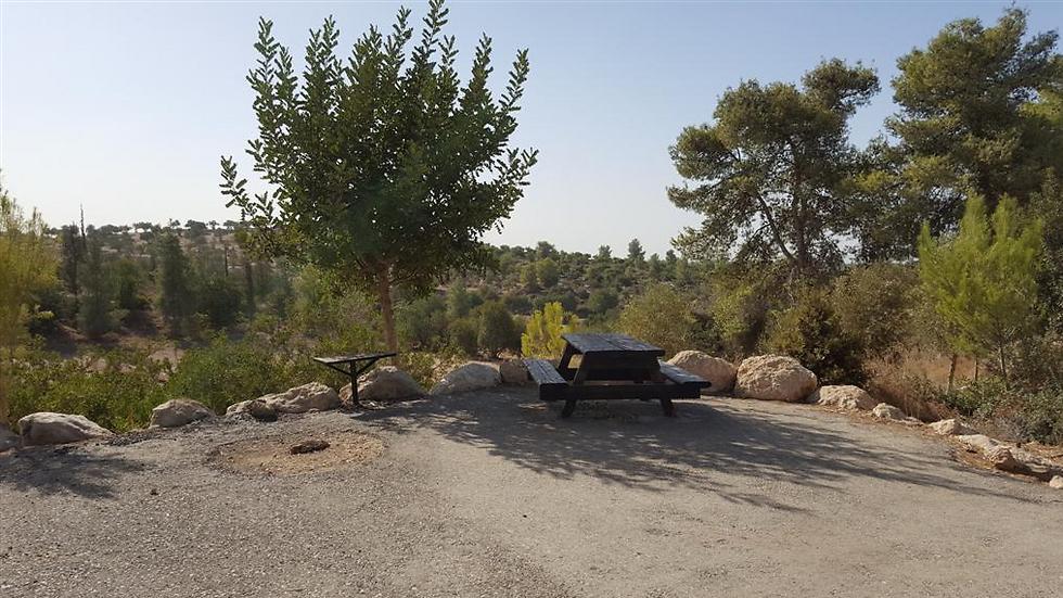 לא מצריך שעות נסיעה מרובות: טיול ביער חרובית שבמרכז הארץ (צילום: ליאת שומן)