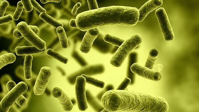 מספר החיידקים בגוף עשוי להשפיע על תחלואה בסרטן (צילום: shutterstock) (צילום: shutterstock)