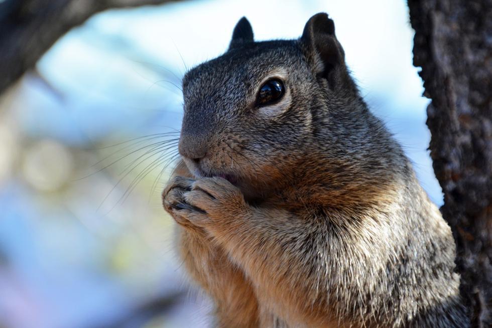השעון הפנימי מורה למרמיטה לאכול לראת החורף (צילום: shutterstock)