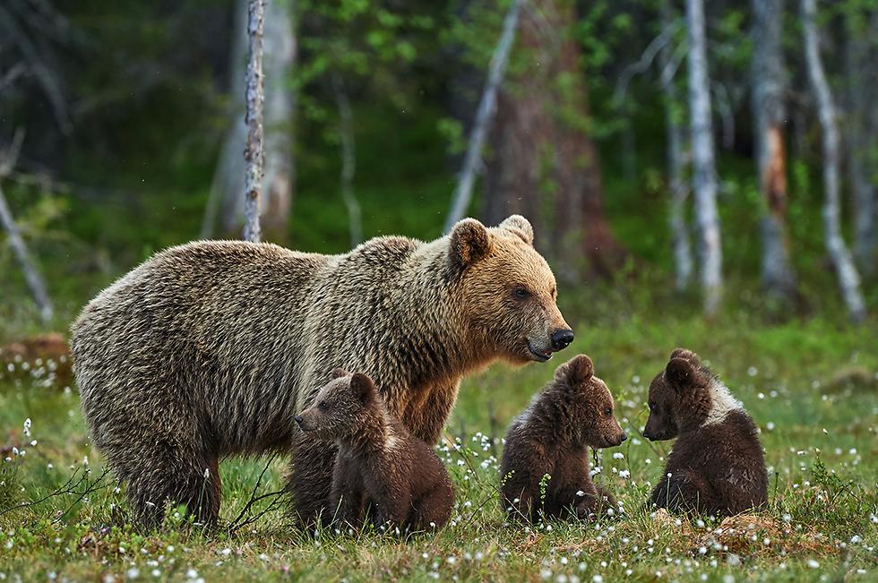 כאן בין היערות, גני החיות והפארקים הילדים בטוח לא ישתעממו (צילום: DepositPhotos)