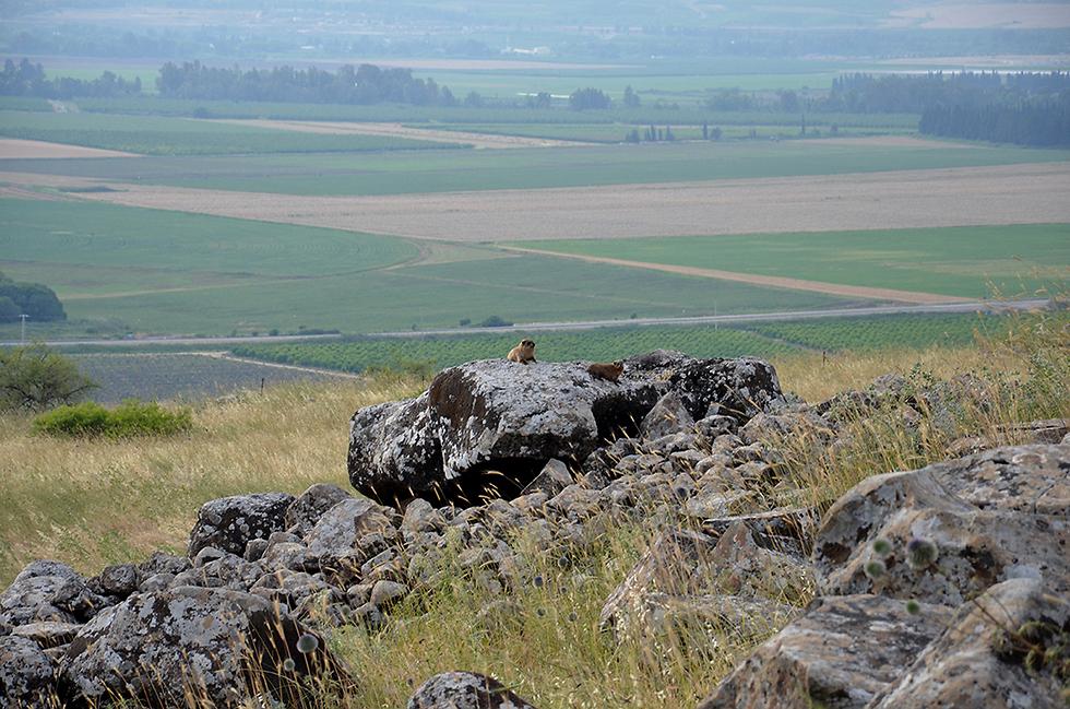 Дольмен в Галилее. Фото: Гонен Шарон