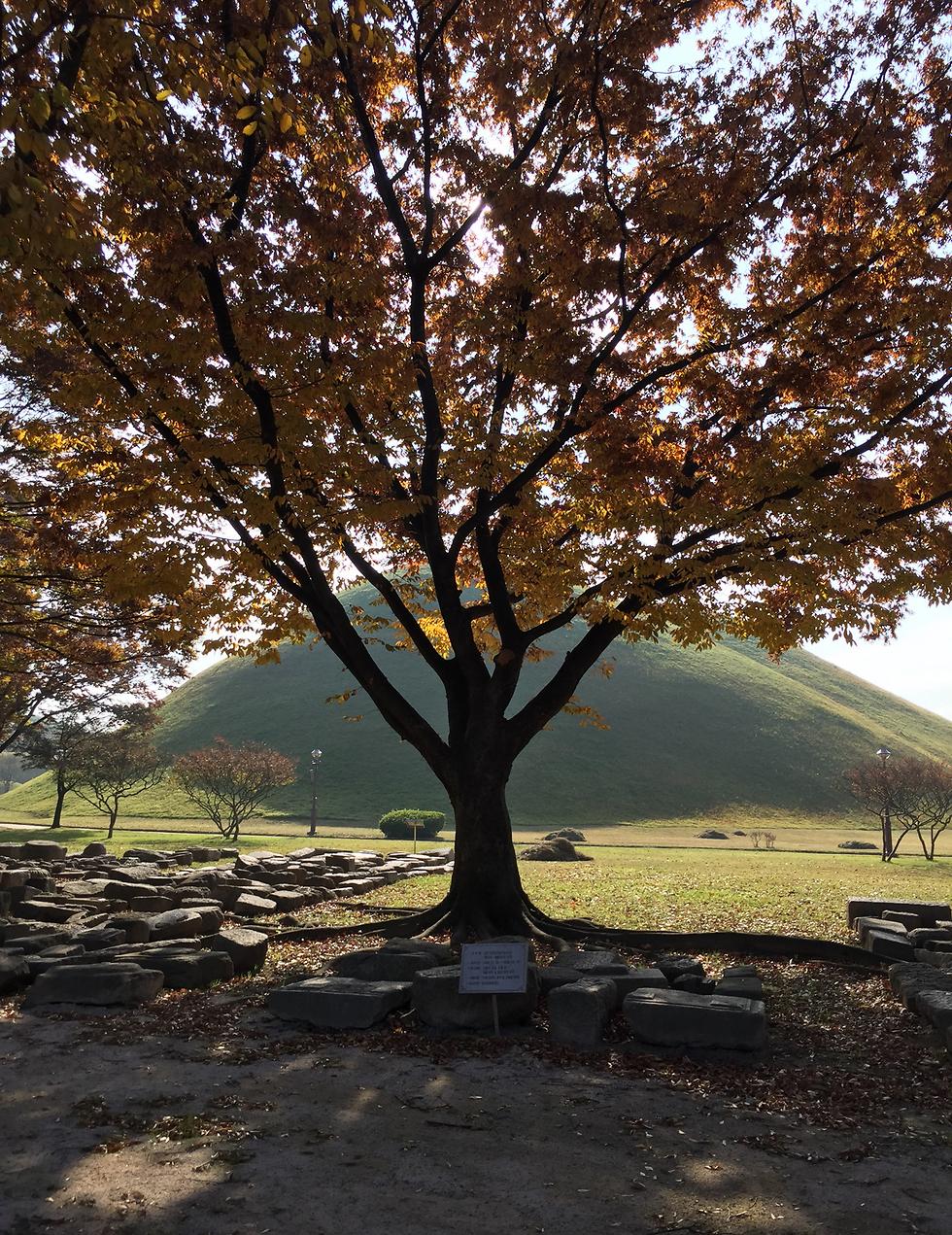 קבר מלך מתחת לטומולוס (עירום עפר) כיפתי, אתר דארוונגון, ג'יונגג'ו ()