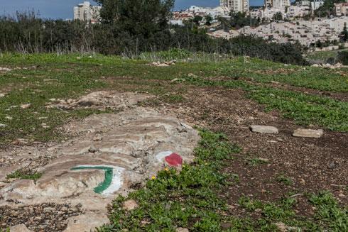 """פעילי """"ירוק בלב"""" סימנו בגבעה מסלולי הליכה ודאגו לניקיון מקיף (צילום: אינסה ביננבאום)"""