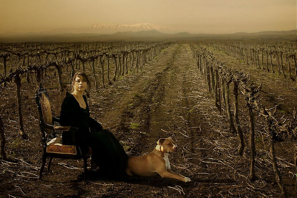 מאחור הכרם, לצדה מבשר רעות - הכלב. וברקע החרמון. העתיד העצוב של איזבל (צילום: דיקלה לאור) (צילום: דיקלה לאור)