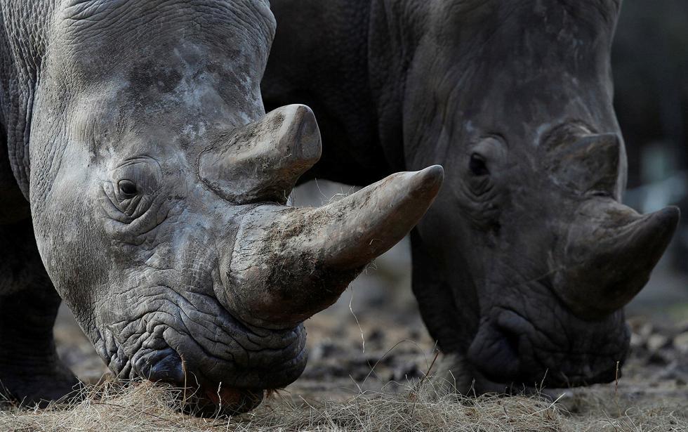(צילום: REUTERS/Christian Hartmann )