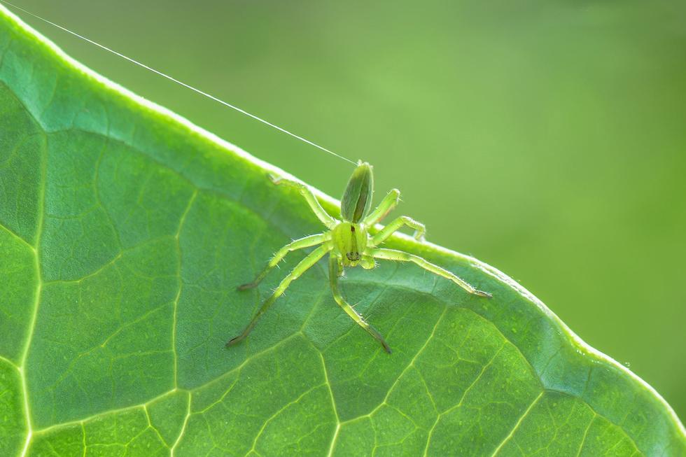 מברישן ירוק במרכז (צילום: אורן אהרוני)