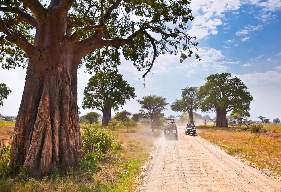 הדרכים היפות של אפריקה  (צילום: shutterstock) (צילום: shutterstock)
