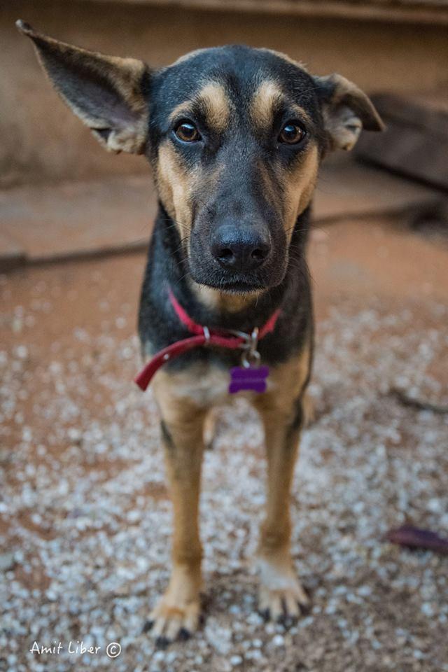 (צילום: עמית ליבר, כלבים של החיים) (צילום: כלבים של החיים)