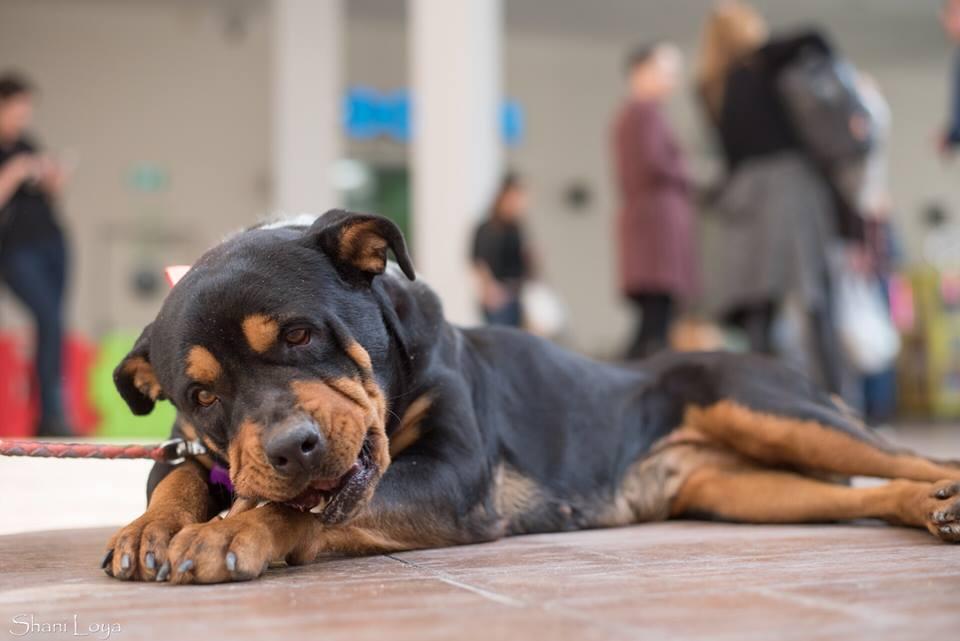 (צילום: כלבים של החיים)