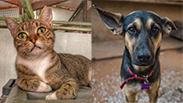 צילום: כלבים של החיים, צער בעלי חיים ירושלים
