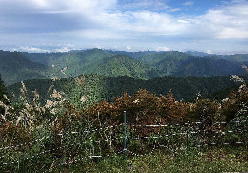 המחוז הסודי יותר היפה והרגוע של יפן: וואקאיאמה (צילום: שירי הדר)