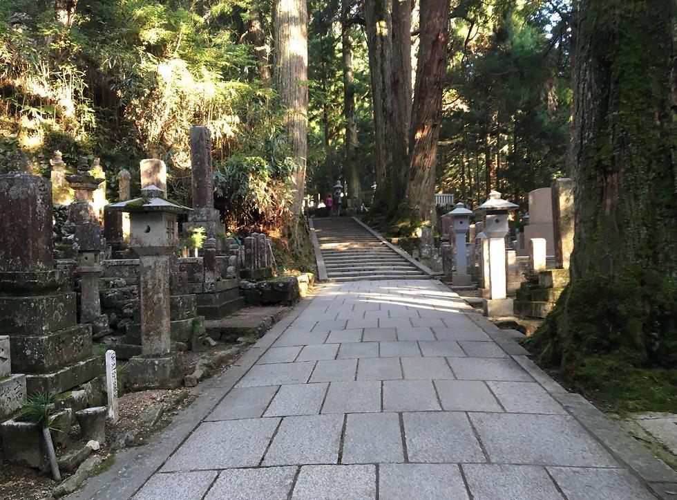 """השביל הארוך של 2 הק""""מ בין מאות אלפי הקברים והעצים הארוכים (צילום: שירי הדר)"""