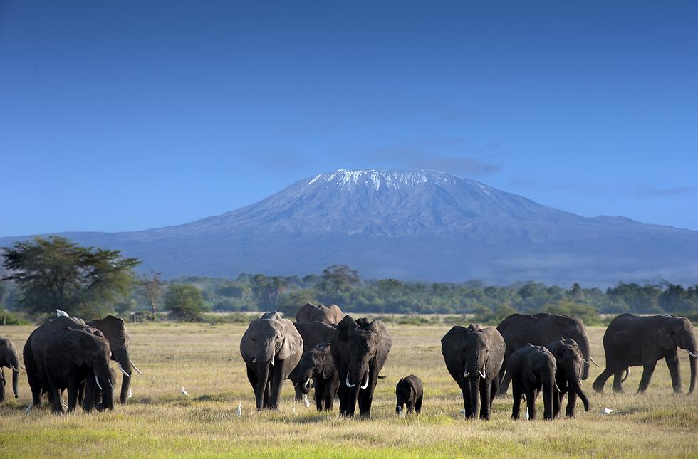 אפשר לנסוע שם ימים על ימים ולא לראות שום דבר חוץ מהיפופוטמי, פילים ובעלי חיים (צילום: shutterstock) (צילום: shutterstock)