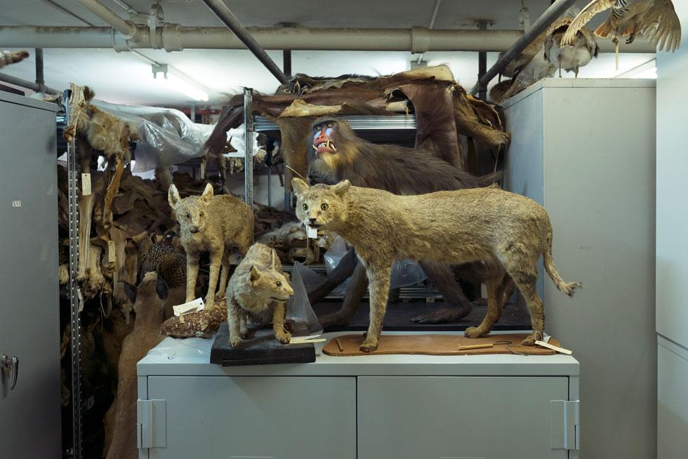הם, למשל, עומדים להתמקם במוזיאון החדש. רוב התצוגה תהיה קבועה, ונכון לעכשיו לא יהיה קשר עין בין המבקרים לבין מאות החוקרים (''הם לא רצו להרגיש באקווריום'') (צילום: גדעון לוין)