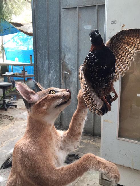 פוחלצים של טורפים ועופות דורסים (ועוד ועוד) (צילום: מוזיאון הטבע עש שטיינהרדט)