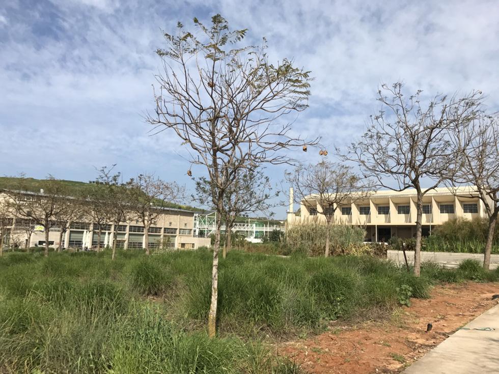 מרכז המבקרים משמאל, המפעל החדש מימין, וביניהם  הגשר הקל למעבר המבקרים (צילום: הילה שמר)