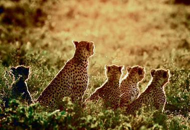 האם וארבעת הגורים ברגע של שלווה משפחתית