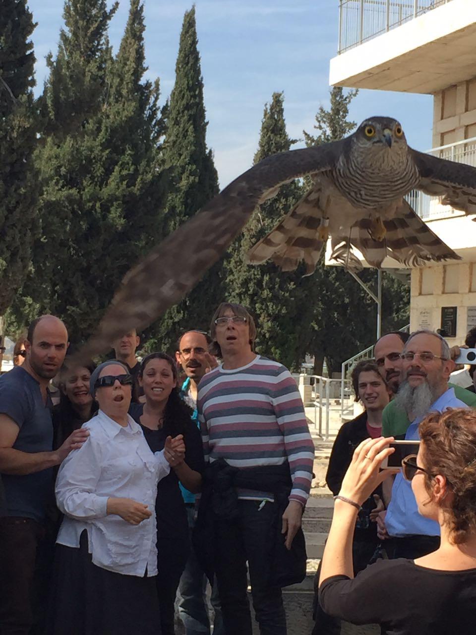 נץ מצוי ששוקם על ידי שמוליק לנדאו מושב בטבע בבית העלמין בירושלים (צילום: לימור קטן פרידמן)