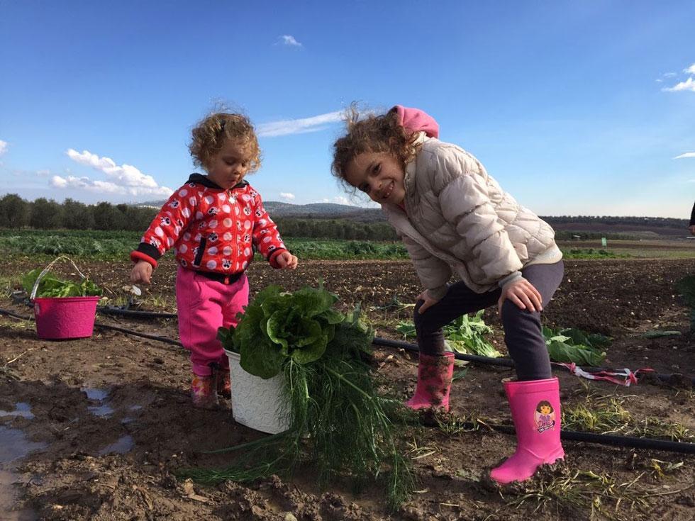 קטופותי: ירקות טריים ישר מהשדה