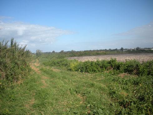 לפני. הביצות ההיסטוריות יובשו, ממש כמו שקרה באגם החולה (צילום: באדיבות אדר' נוף ליאור לווינגר, סטודיו אורבנוף)