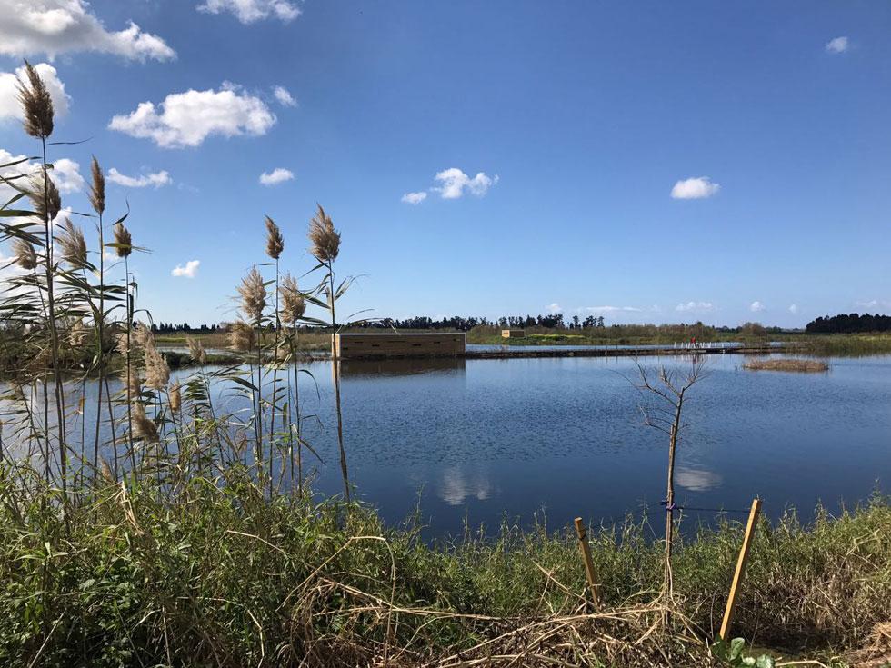 זהו פארק הציפורים בעיינות חוגלה, או בשמו הרשמי ''אגמון עמק חפר''. 300 דונם ששימשו את בריכות הדגים של עין החורש (צילום: באדיבות אדר' נוף ליאור לווינגר, סטודיו אורבנוף)