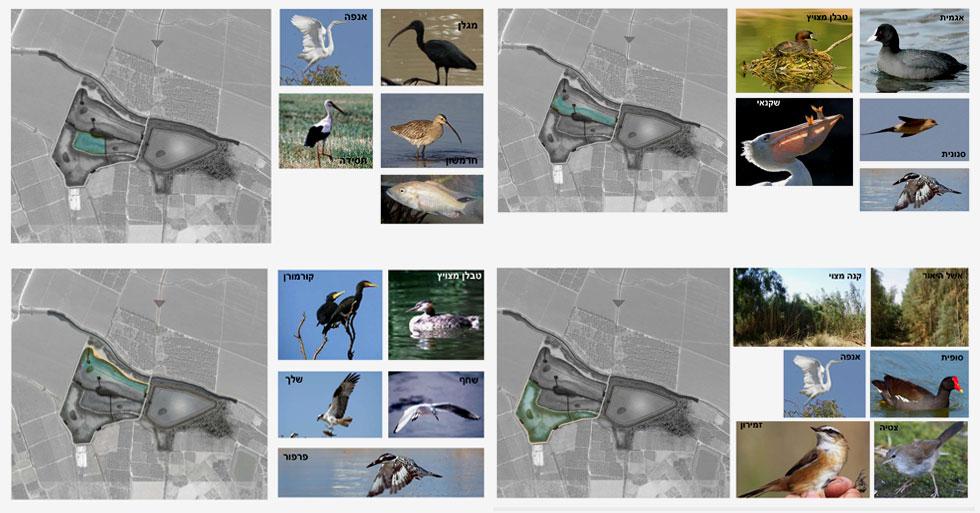 חמישה בתי גידול (ארבעה מהם מופיעים כאן, החמישי בגוף הכתבה) מותאמים באמצעות גבהים משתנים של המים לעופות שונים שאמורים להתלהב ולהגיע (באדיבות אדר' נוף ליאור לווינגר, סטודיו אורבנוף)