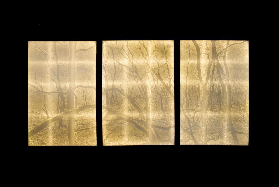 סימה לוין יצרה נוף רחב ממדים של יער, מואר מאחור באור לבן וזוהר. כשמתקרבים מגלים שאין כאן ציור, אלא חירור סיזיפי של הנייר במחטים בעובי משתנה. זהו לא סתם יער: הדימוי מבוסס על צילום של הכרמל השרוף, משנת 2010 (צילום: הדר סייפן)