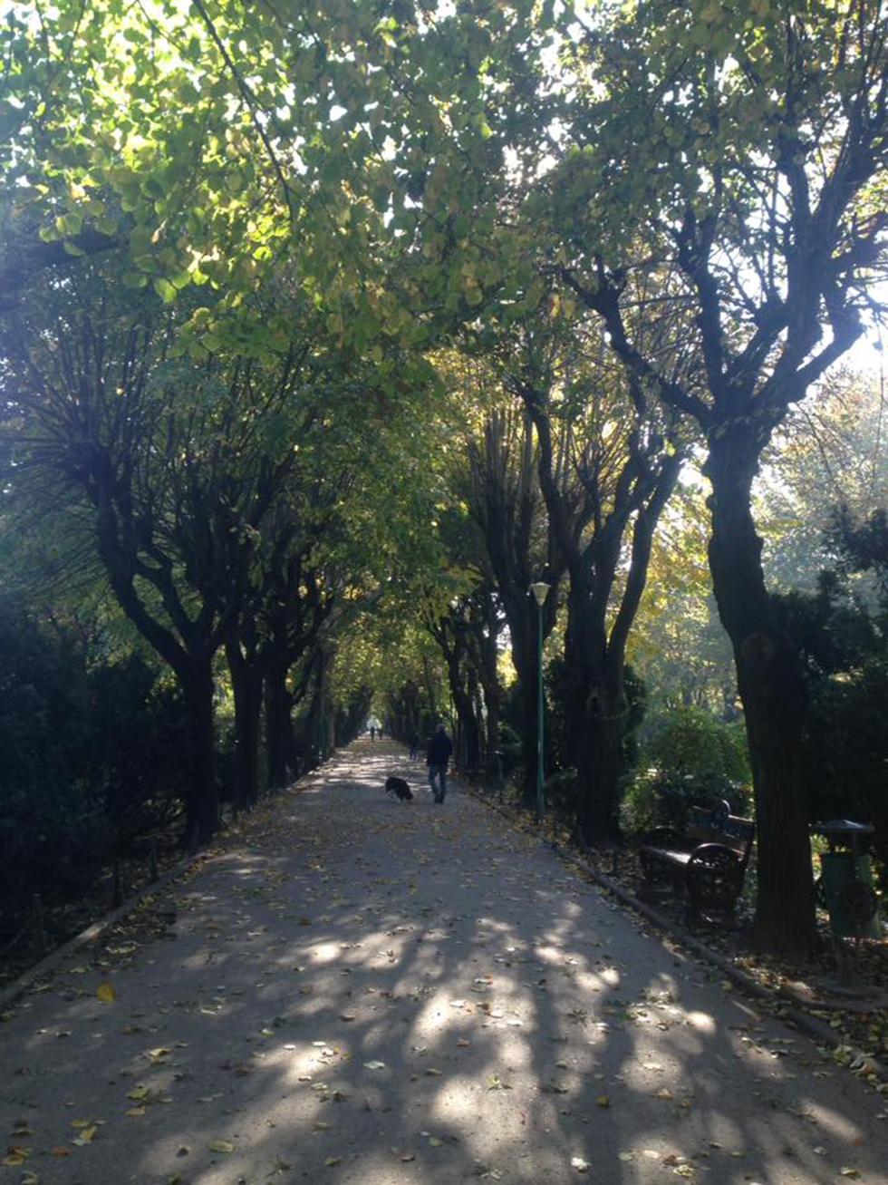 160 דונם של ריאה ירוקה באמצע העיר