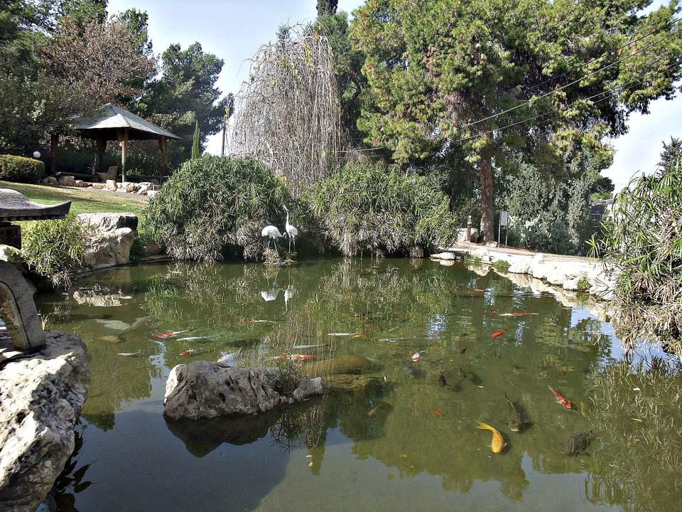 Японский сад в кибуце Хефциба.Фото: Леон Левитас