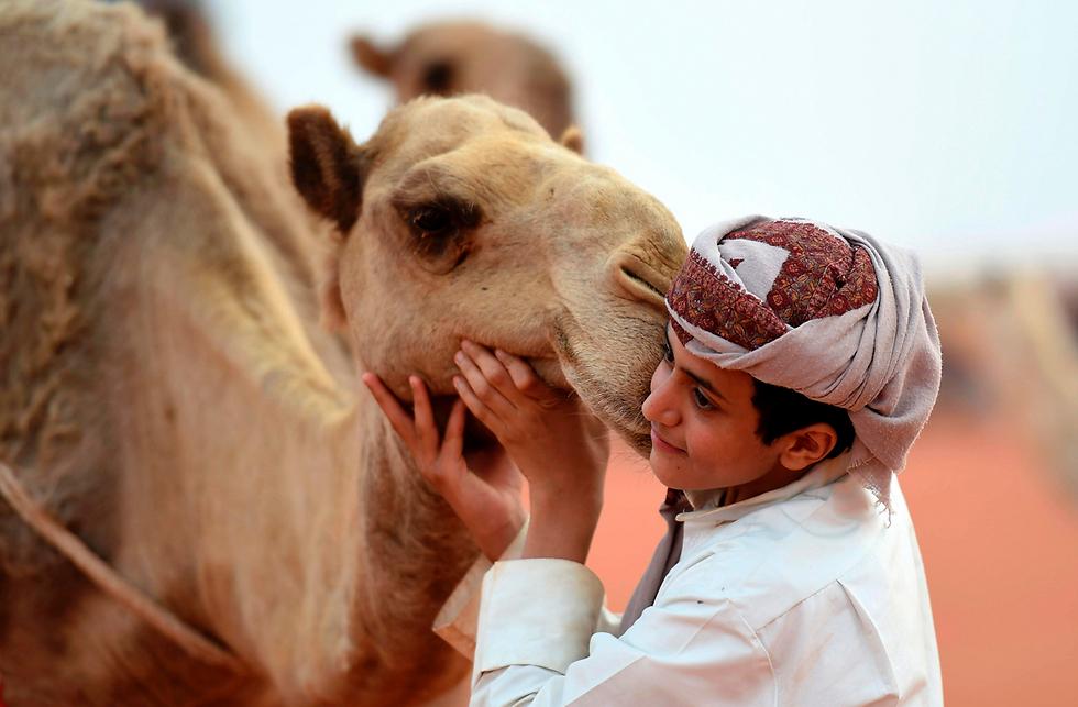 """ילד סעודי מצטלם עם גמל במהלך פסטיבל הגמלים השנתי על שם המלך עבד אל עזיז ברומה, שנמצאת 150 ק""""מ מזרחית לבירה ריאד (צילום: AFP)"""