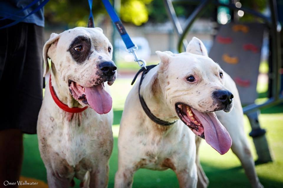(צילום: עומר ולווטר, כלבים של החיים)
