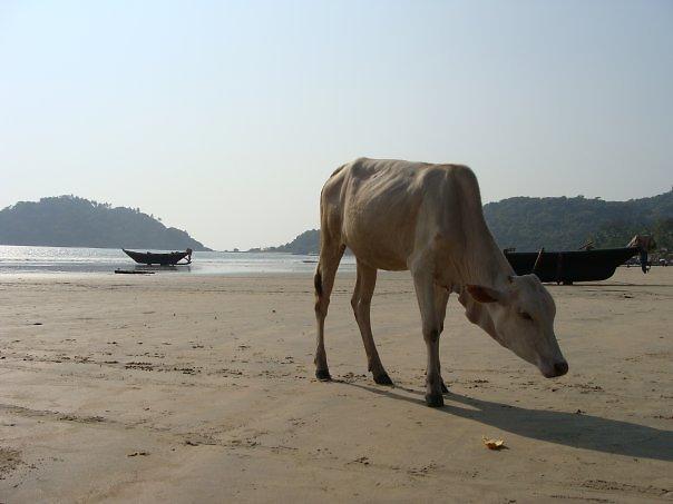 מראות לא רגילים בחופי המדינה הדרומית בהודו (צילום: אסף קוזין)